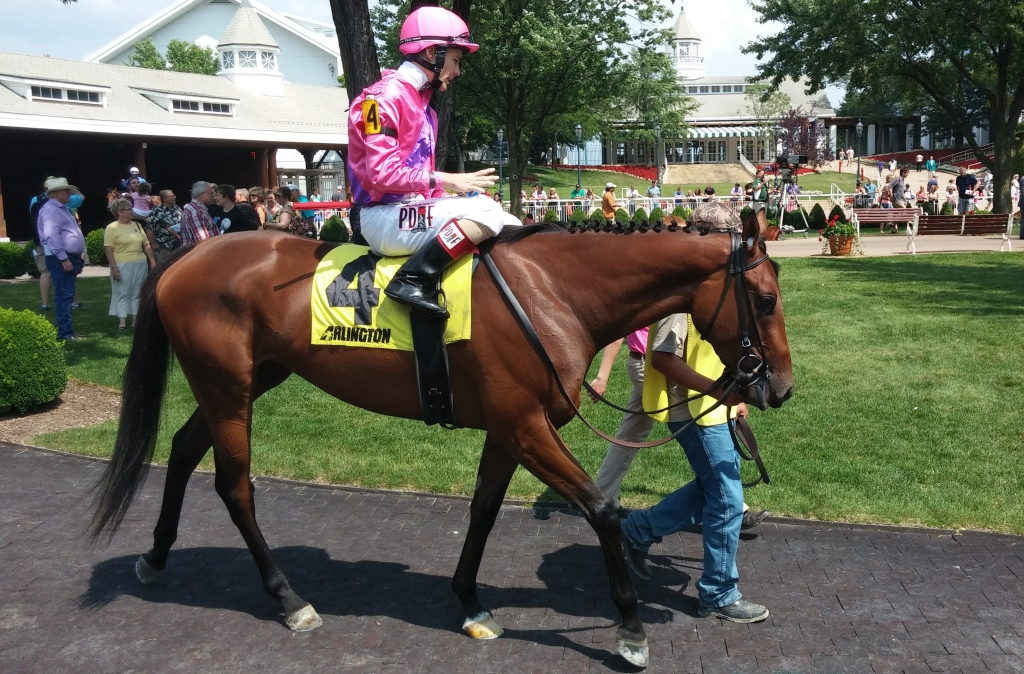 Please Explain in the paddock walking ring before her first turf race, August 3, 2014.