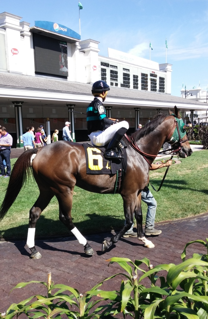 I am not sure why Deputiformer is racing, since I thought he had been retired earlier this year.  Still, he is a gorgeous horse.