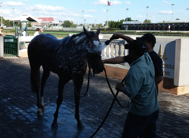 He may be cute, and he may be fast, but Heart to Heart is not getting out of his post race bath.