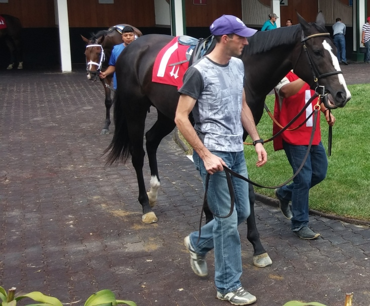 I took pictures of two horses before Whirl's race just because of the blazes on their faces.  This one, the front-running Streetheart, was one of two dead-heat winners of the race.