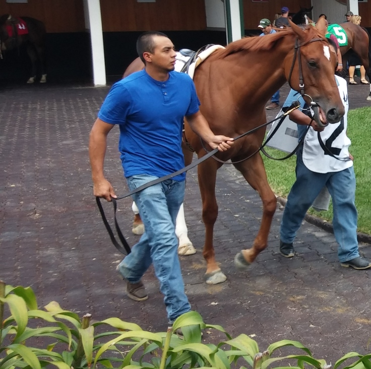 Two-year-old Curlin baby Whirl (Shag, by Dixieland Band) made her second career start in Saturday's fifth race.