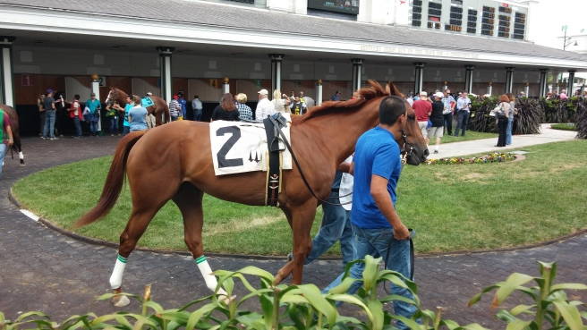 Whirl, walking around the paddock before her race.  She finished eighth, just as she did in her first start.