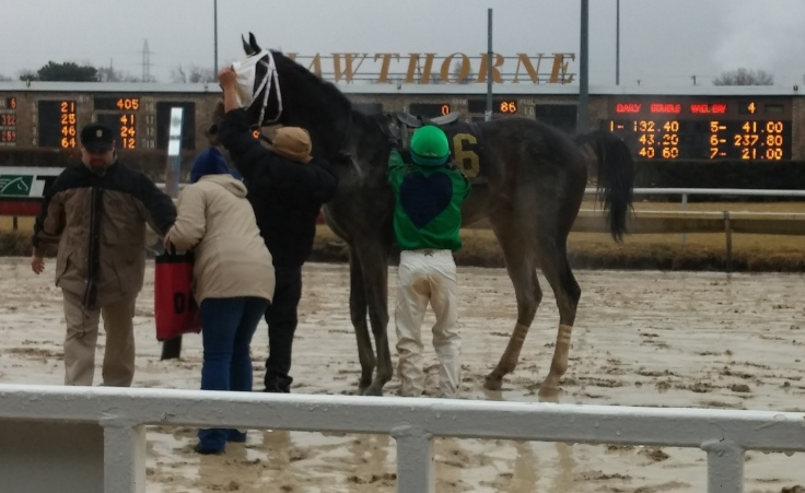 Connections unsaddle a muddy Shadrach Bond after his second-place finish.