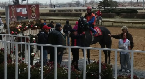 Fort Suprise, in the Hawthorne winners' circle on December 6, 2014.  Tim Thornton is aboard; Maria Thornton stands in the foreground.