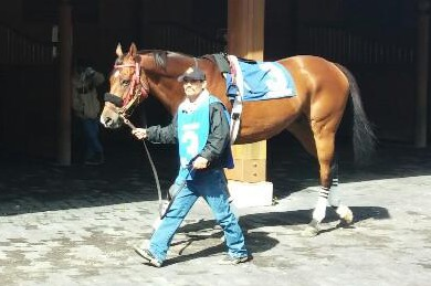 Hurta, in the paddock before his race at Arlington on September 13, 2014.