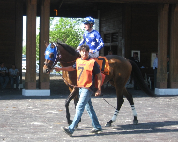 Three things are certain in life: death, taxes, and Affirmed Once More being the pick of the paddock in any race he enters.