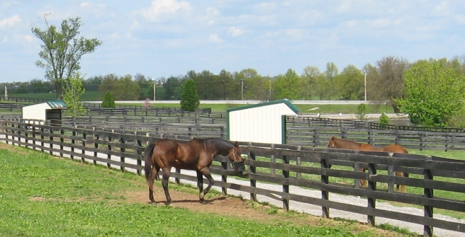 In opposite pastures, Afternoon Deelites (foreground) and Mixed Pleasure have an afternoon snack.