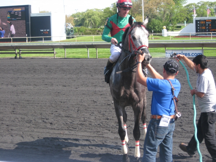 """Away Westward, winner of the 7th on Saturday, makes his best """"i'm a cute Fort Prado baby"""" face."""