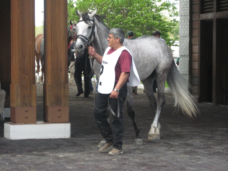 """Fellow Fort Prado baby Bold Rally looks out as if to tell Big Tom Prado, """"You think you have forelock?  No.  THIS is forelock."""""""