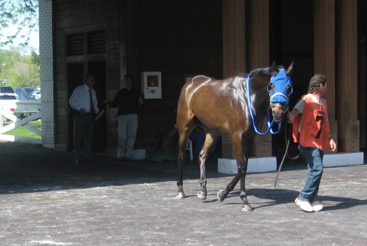 Crusin Fora Bruzin gives a sassy look befitting of his name.  Alas, sass got him only so far, and he finished ninth behind Away Westward in Saturday's 7th race.