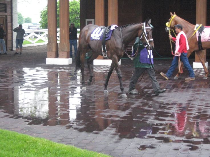 The showers had subsided, but the paddock remained a little wet for Daddy's Pleasure (10) and Chica Bonita (8) before Sunday's finale.