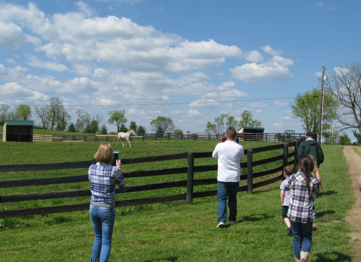 Silver Charm has become quite the pasture pet at Old Friends.  Michael Blowen called him over to see the tour group, and he came running to see us!