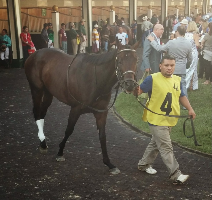 The aptly named Guapo Man, who finished sixth as the favourite in the race after the Kentucky Derby.