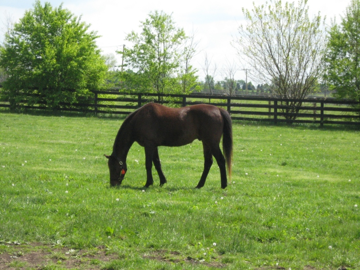 Gulch, enjoying some grass and some alone time.