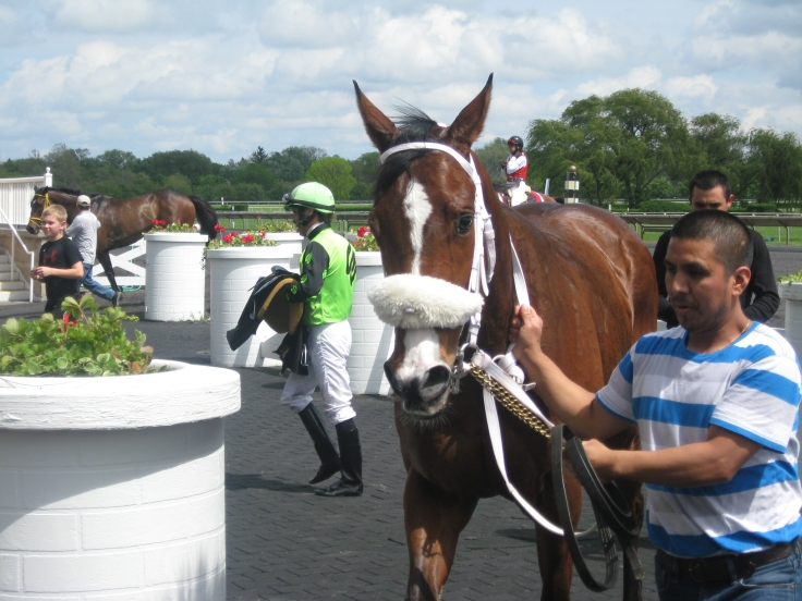Hey Pretty Boy, who won the 4th race, shows everyone how he must have gotten his name.