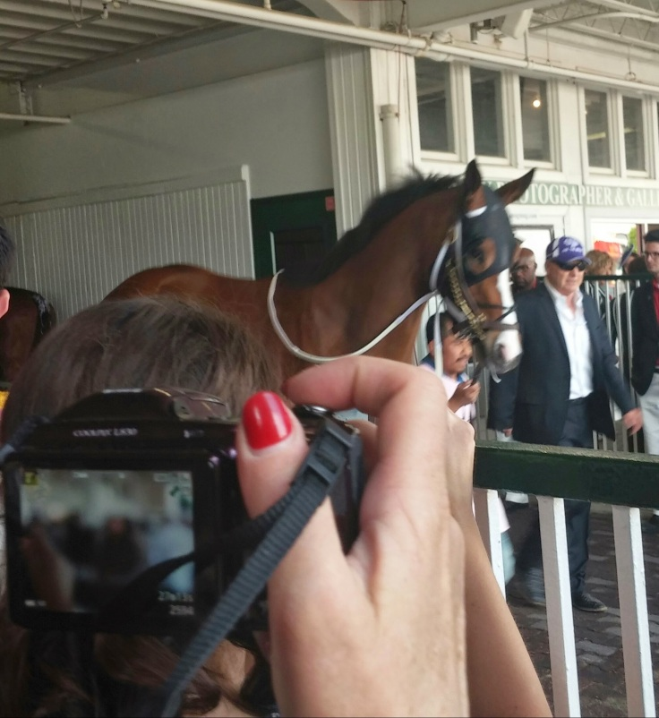 Illinois-bred Lewys Vaporizer, on his way to the paddock before the 2nd race on Derby Day.
