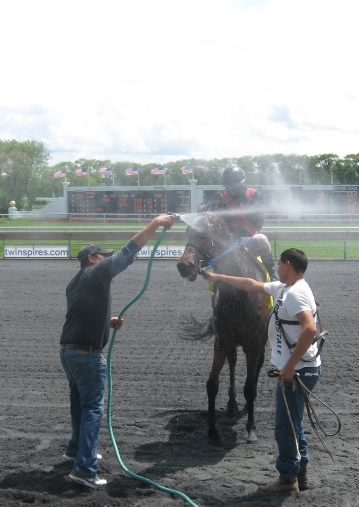 After winning the 2nd race, Nikaluk enjoys a bath.