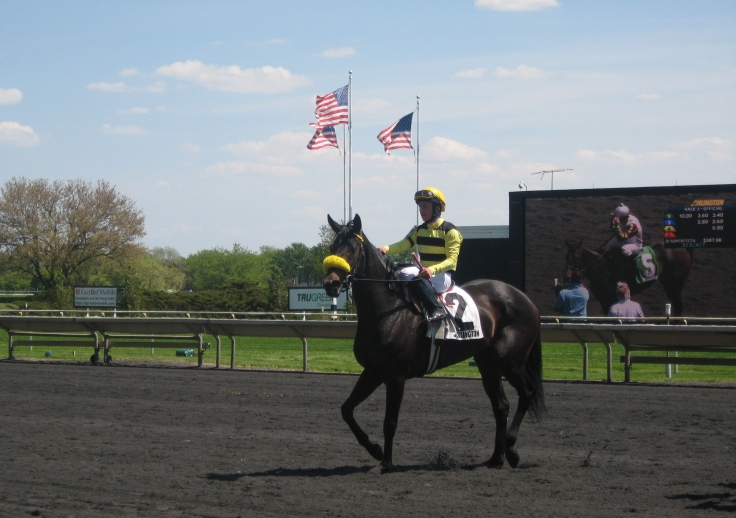 Penelope Perfect may have finished fifth behind Seeking Luck, but she still pranced around like she owned the place.