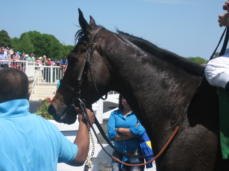 Seeking Luck is calm after finding that luck.  She won Saturday's Arlington 3rd, an N1X turf dash, by daylight.
