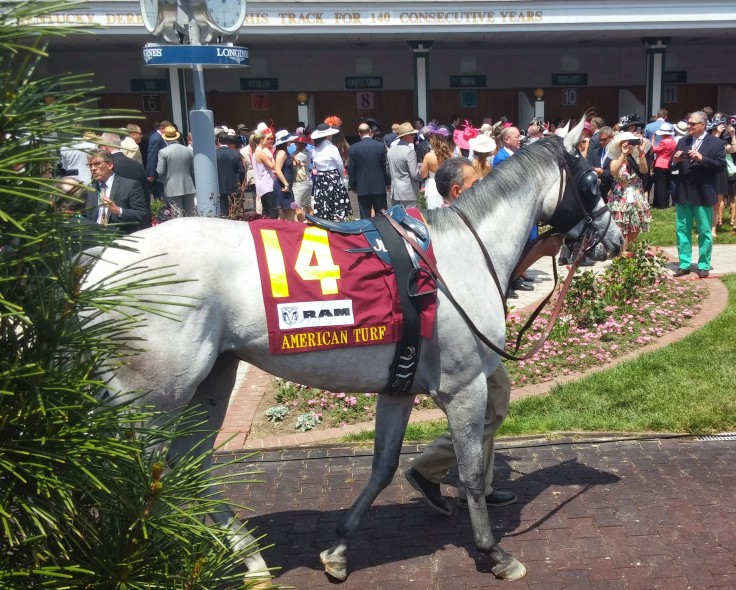 I approved of World Approval, who finished a solid third in the American Turf (GII).