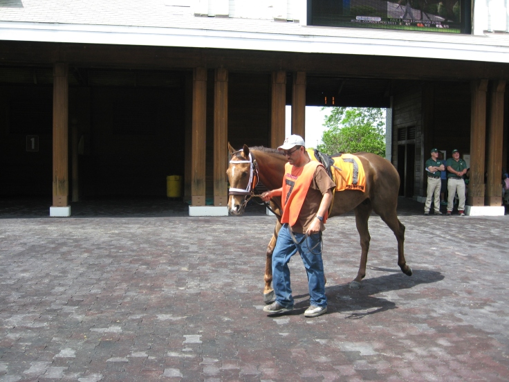 Yankee Dealer, before facing the toughest class test of his career in the 5th race, a stakes-quality allowance.  He passed with flying colours, wearing down Mister Marti Gras and winning the race.