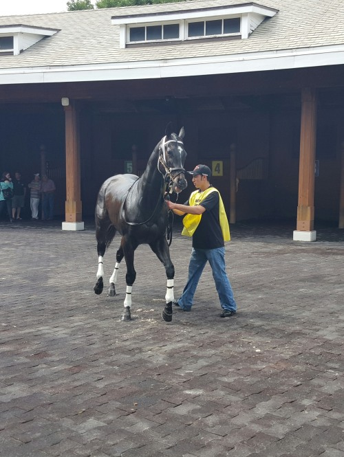 Frostbite Falls, on his toes as he walks around the Arlington paddock.