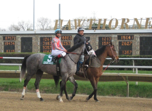 Conquest Curlinate in the post parade before the 2015 Illinois Derby.