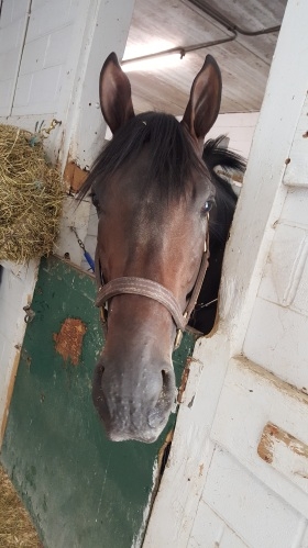 Spoiler alert: I picked this horse to win the Hawthorne Derby.