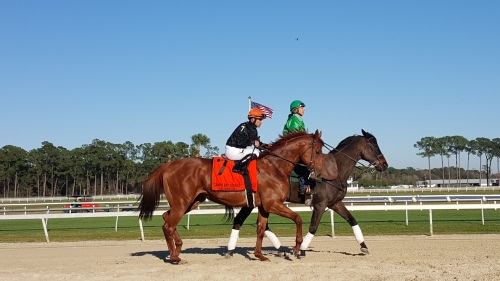 Reload, my pick in the Tampa Bay Stakes, looked so classy in the post parade.  Take the Stand made him work for it, but Reload won the race.