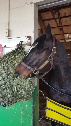 No mints for Peso since he was in Sunday afternoon, but the barn pet was noshing on hay like a champ.