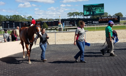 Polo Art, the first winner during my trip to Tampa Bay Downs.