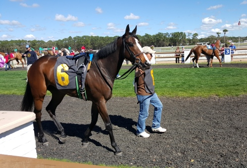 In the same race as She's Annie's Girl, Hidden Pond also ran. She is a four-year-old half-sister to another stallion I love: Fort Prado.