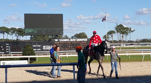 Liar's Smoker, deservedly self-satisfied after notching her second win of the Tampa meet.