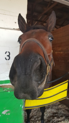 "Lovely Loyree's ""try me, Tepin!"" face."