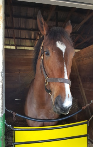 Illusive Fugitive has one of the cutest noses in horse racing.