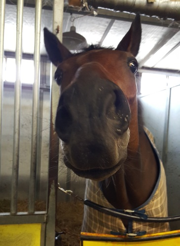 Lovely Loyree may be a goofball in the barns, but she is a serious turf mare.