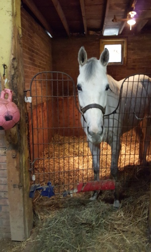 Orphanellie: the most curious eight-year-old mare you'll ever meet.