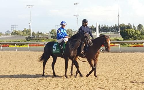 Lapinski, a maiden winner in August, represtend Arlington in the Natalma Stakes (GI).