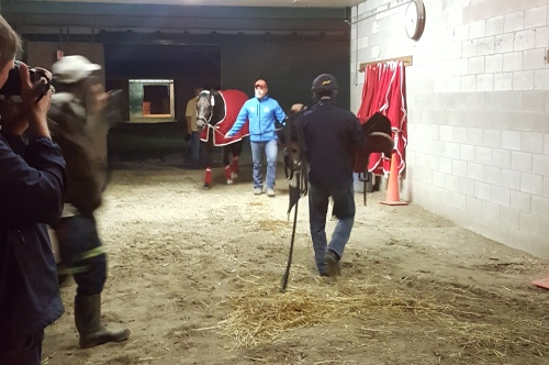 Amid the media hubbub and the normal barn activity, Norm Casse walks Tepin around the barn after her morning gallop.