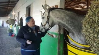 Treating one of my favourites, Big Tom Prado, to a delicious peppermint. (Photo credit: Michele Boyce)
