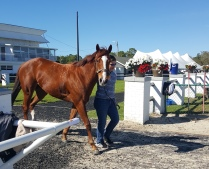 Illinois-bred Brazyn Appeal leaves the paddock after being claimed to the barn of trainer Ron Potts.