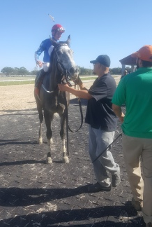 Hello, big nose! Michigan-bred Candy War enjoys a visit to the Tampa Bay Downs winners' circle.