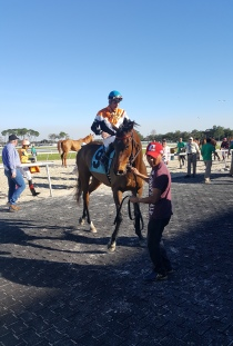 Chicago Style, after running his career record to a perfect two-for-two. He is not Illinois-bred, but is owned by Chicago-connected outfit Glen Hill Farm.