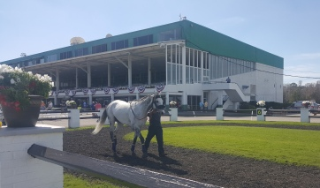 Kasaqui schools in the paddock two days before finishing second behind Inspector Lynley in the Tampa Bay Stakes (G3).